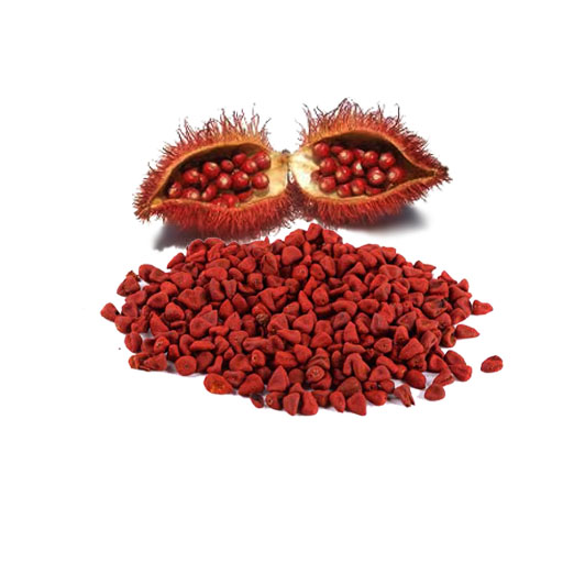Giới thiệu về cây điều đỏ