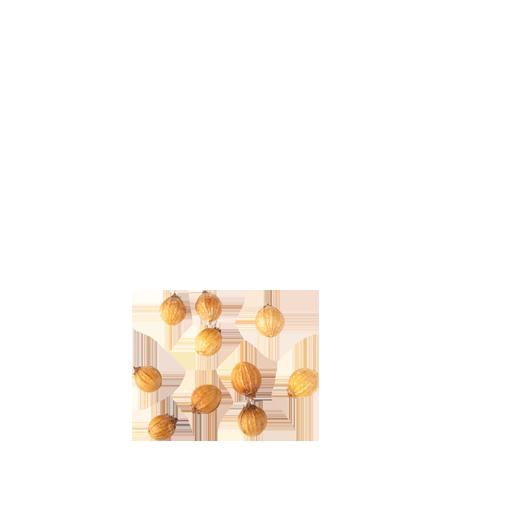 Gia vị bột hạt mùi chất lượng